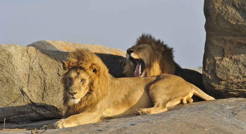 Top 12 Best National Parks in Tanzania