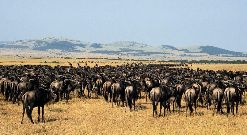 5-Days Serengeti Ngorongoro and Manyara Safari from Mwanza to Arusha
