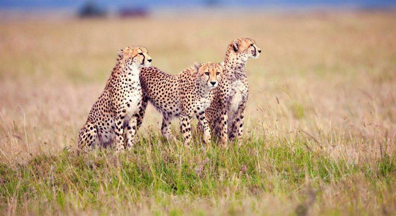 6 Days Arusha to Mwanza Safari Via Ngorongoro and Serengeti