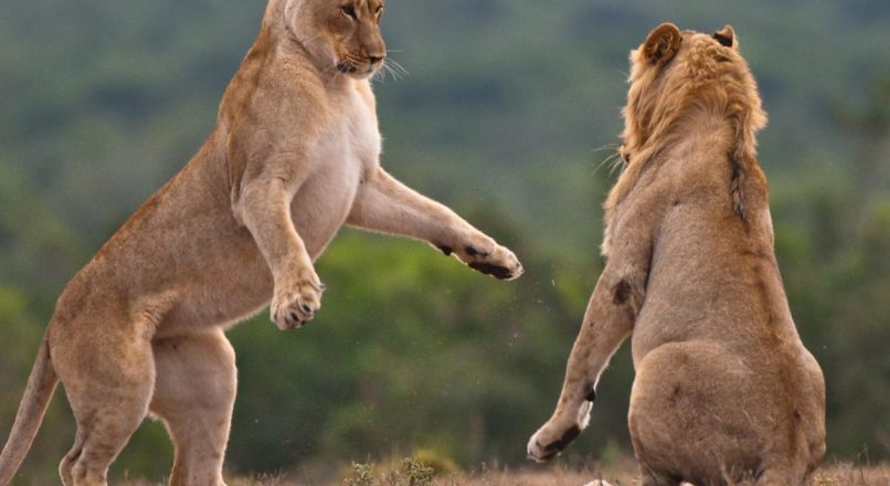 12 Top-Rated Tourist attractions in Tanzania