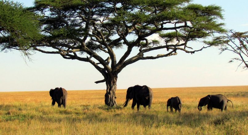 Top 5 National Parks in Northen Tanzania