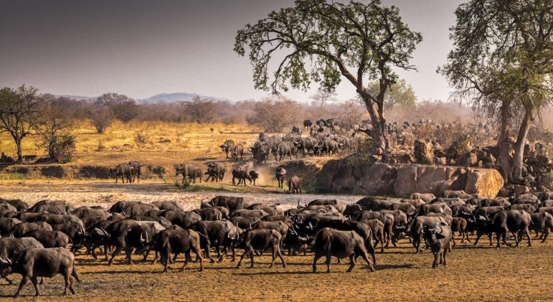 Top 5 National Parks in Southern Tanzania