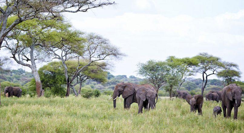 2 Days Lake Manyara and Ngorongoro