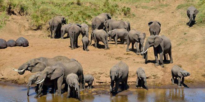 2 Days tarangire and Ngorongoro