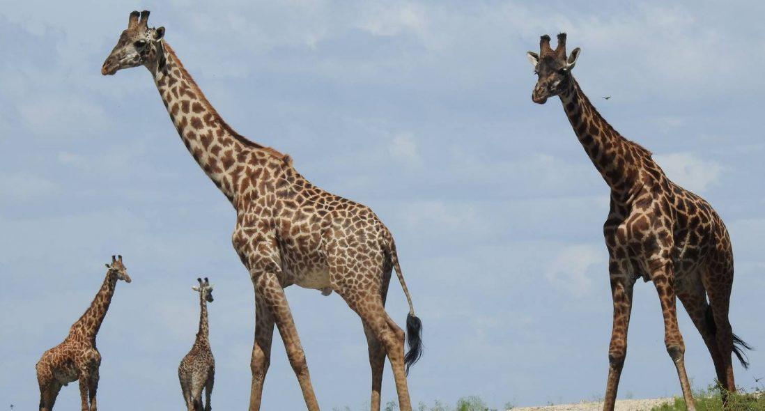 Dar-es-salaam Safari Tours I 2021 Dar-es-salaam Safaris