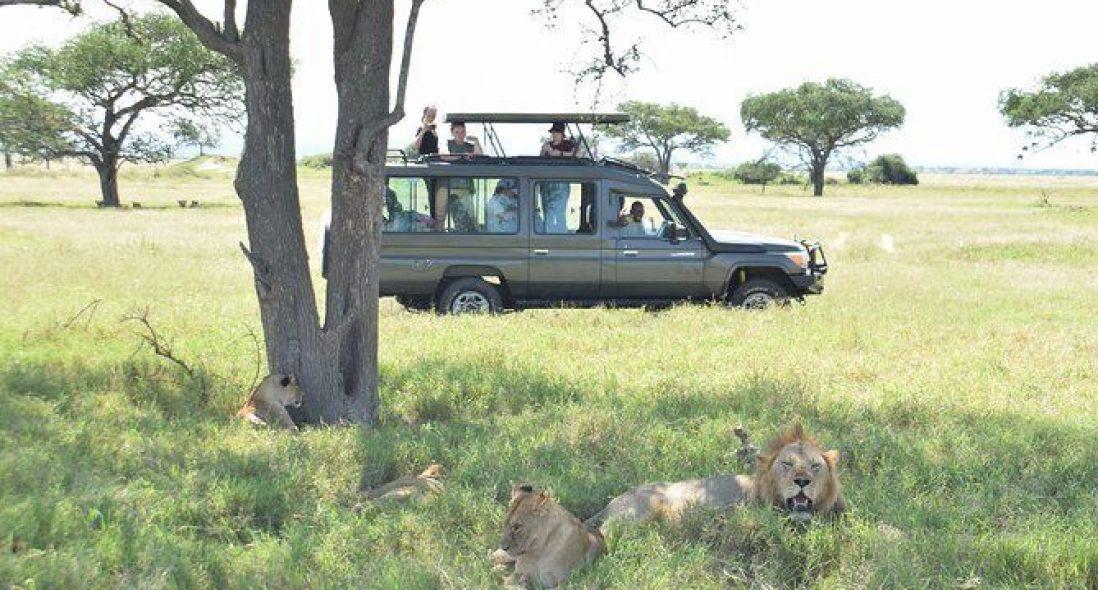 Mwanza Safari Tours I 2021 Tanzania Safaris