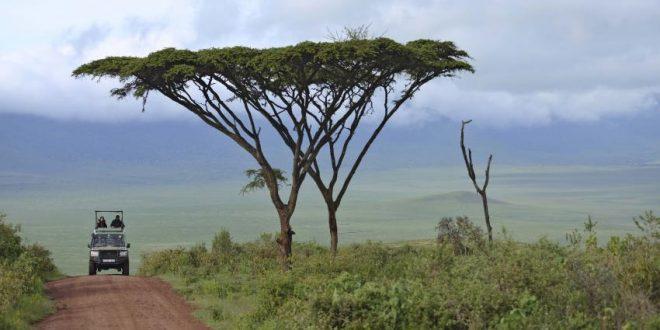 Day tour to Ngorongoro Crater