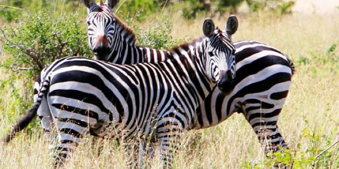 Tanga Safari Tours