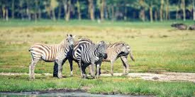 19 Days Tanzania Fully Cycle