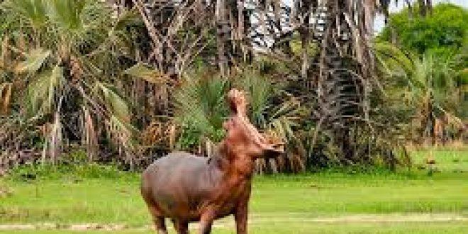 2 Days Katavi National Park