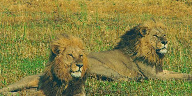 5 Days Katavi National Park