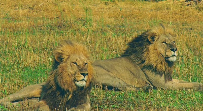 Getting to Katavi National Park