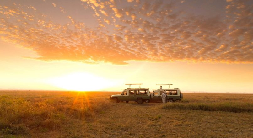 Best Safari tours from Iringa