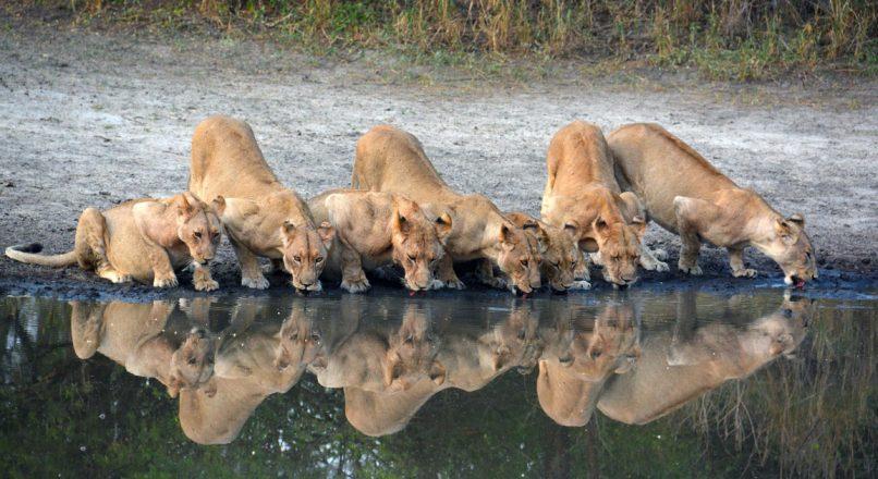 Best Selous Safari tours