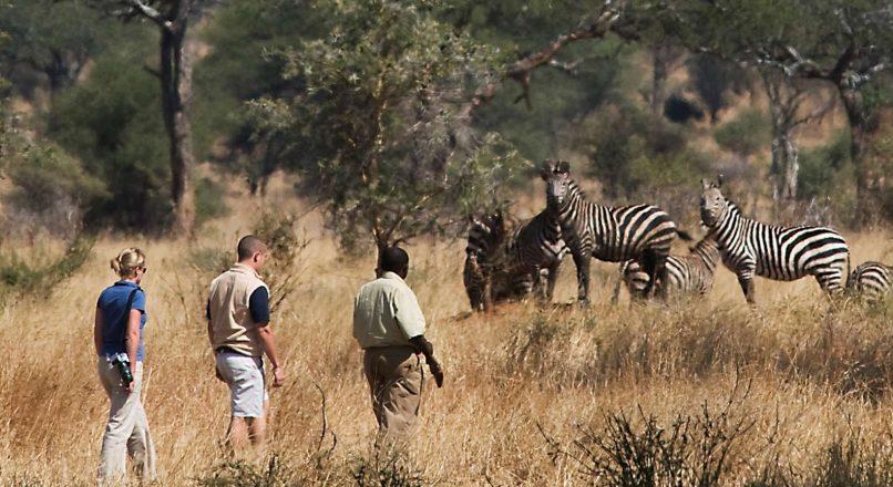 Best Tarangire Safari tours