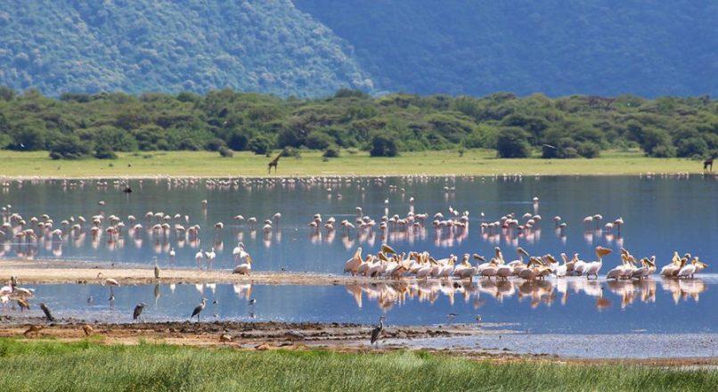Best Lake Manyara Safari tours