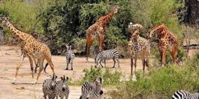 5 days Safari flying to Selous and Ruaha
