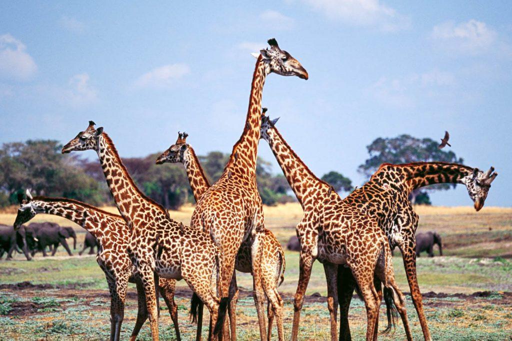 8 Days Safari Katavi National Park