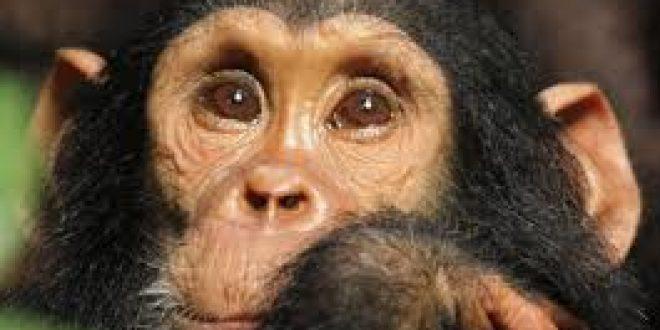 5 Days Mahale Chimpanzee Trekking