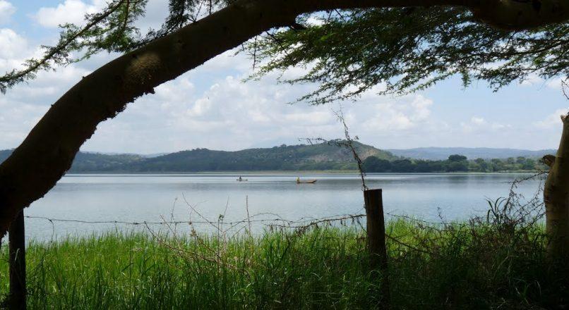 1 Day safari Lake Manyara