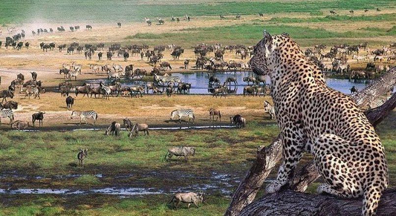 3 Days Ngorongoro, Manyara and Tarangire