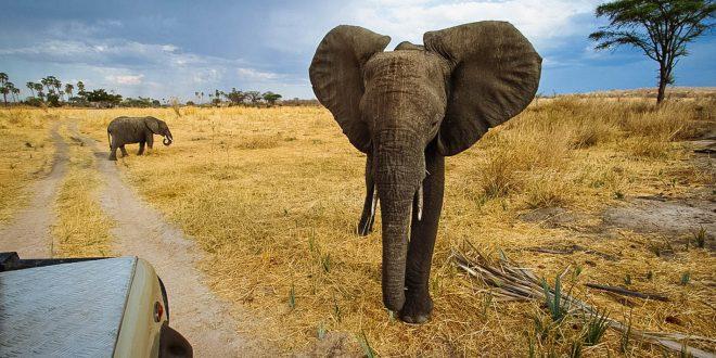 2 Days Safari to Ruaha from Iringa