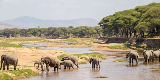 1 Day tour to Ruaha National Park from Iringa
