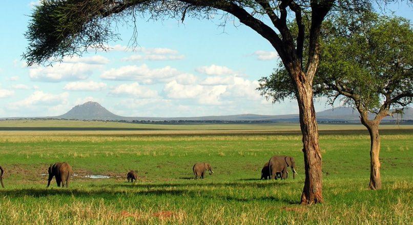 2 Days Lake Manyara and Tarangire