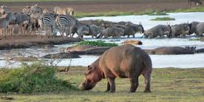 Best Safari tours from Arusha