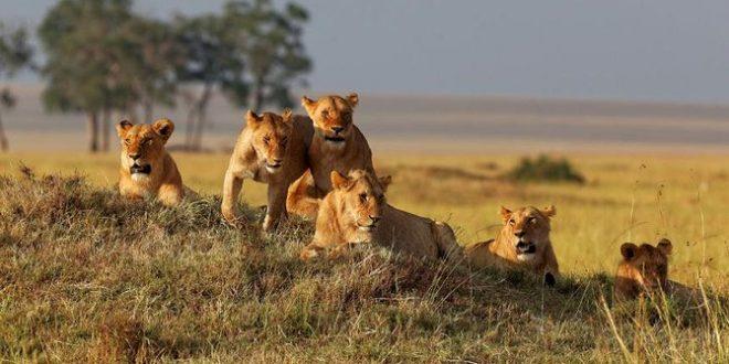 Tanzania Walking Safari